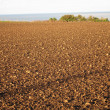 Stock Photo: Ground from being sown