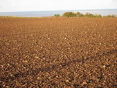 Ground from being sown — Stock Photo