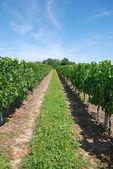 Winnica we francji — Zdjęcie stockowe