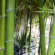 Bamboo grove — Stock Photo #14866409
