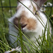 Foto de Stock  : Young domestic rabbits