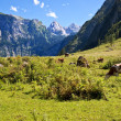 View from the Koenigssee towards the alps, with cows — Stock Photo