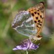 Butterfly sitting on Flower — Stockfoto