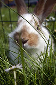 Young domestic rabbits — Stock Photo