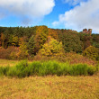 Autumn in the Palatinate Forest - Stock Photo