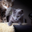 Two cats with antique phone — Stock Photo