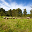 Meadow with sheep - Stock Photo