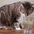 Cat with water — Stock Photo