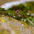 Moss in Ice - Stock Photo