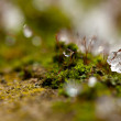 Moss in Ice — Stock Photo