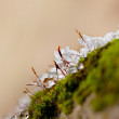 Moss in Ice - Stockfoto