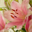 Vintage retro style pink Lilies — Stock Photo