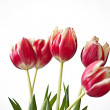 Red Tulips — Foto de Stock