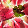 Tulip Leaves - Stock Photo