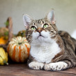 Autumn Cat — Stock Photo