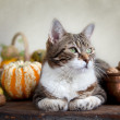 Autumn Cat — Foto Stock