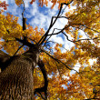 Autumn Tree — Foto de Stock