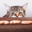 Cat and Sausages — Stock Photo #15838185