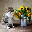 Cat and Sunflowers Painting — Stock Photo