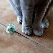 Cat Feet — Stock Photo