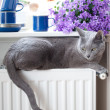 Cat on Radiator — Stock Photo