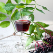 Elderberries — Stock Photo