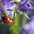 Ladybug and Bellflowers — Stockfoto