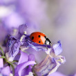 Ladybug and Bellflowers — Lizenzfreies Foto