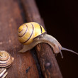 Small Snail — Foto Stock