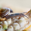 Snails and Pumpkins - Foto Stock