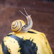 Snails and Pumpkins — Stock Photo