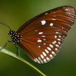 Beautiful brown butterfly - Stock Photo