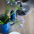 Cat and Flowers — Stok fotoğraf