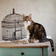Cat and Bird — Stock Photo