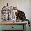 Cat and Bird - Stock Photo