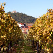 Autumn Vineyard — Stockfoto