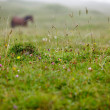 Horse on Alpine Pasture - Stock Photo