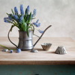 Still life with grape hyacinths - Stock Photo