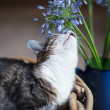 Housecat with Flowers — Stock Photo