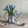 Still life with grape hyacinths — Stock Photo