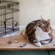 Cat and Bird Cage - Stockfoto