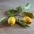 Ripe lemons on a leafy twig - Stock Photo