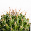 Spiny cactus in flowerpot - Stock Photo