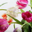 Bouquet of Tulips — Foto Stock