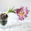 Stock Photo: Tulip Still-Life
