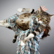 Boy and Cat - Stock Photo