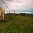 Charolais Cattle in Normandy — Stock fotografie