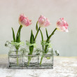 Pink Tulips — Stock Photo #23299666