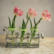 Pink Tulips — Stock Photo #23299826