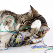 Playful Cat - Stockfoto